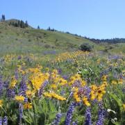 Wildflowers were aplenty