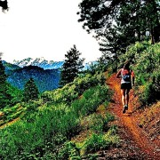 Trail runner and blogger Amber King moves up the trail in the Wenatchee National Forest south of Cashmere.